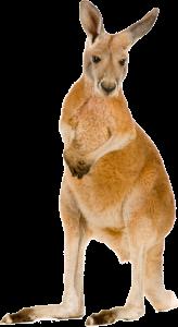 En plus d'être mignons, les marsupiaux — comme les kangourous — produisent des gaz intestinaux écologiques qui intriguent les chercheurs en changement climatique.